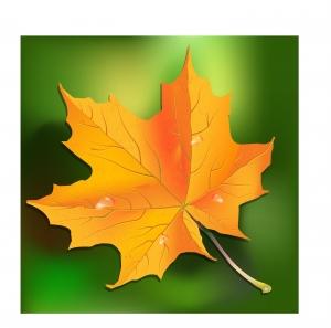 Рисунка на листо